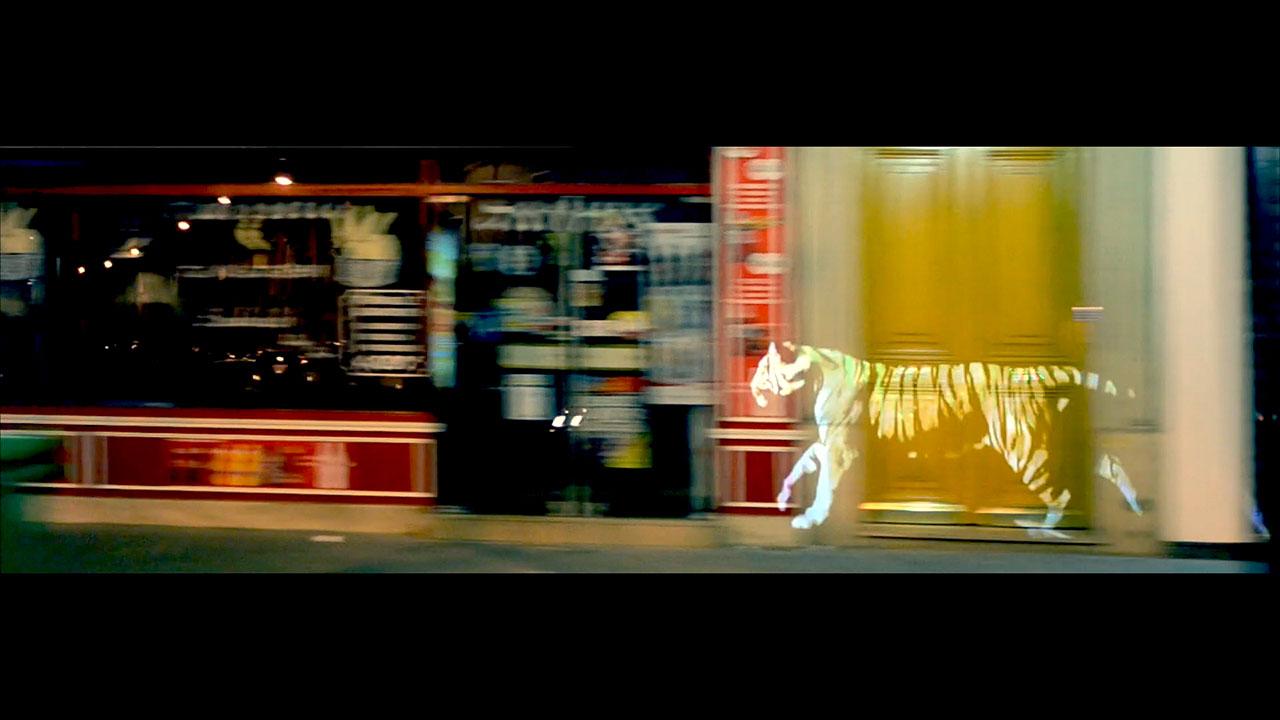 golden_tiger_03.jpg