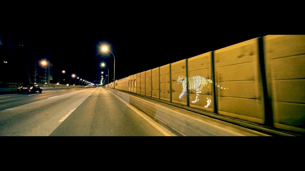 golden_tiger_04.jpg
