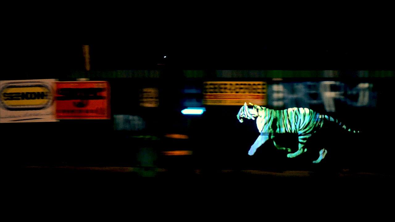 golden_tiger_05.jpg